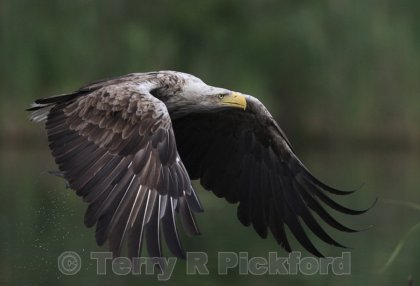 Sea Eagle Power Flight