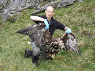 GOLDED EAGLE POISONED THIS MONTH IN W. SCOTLAND