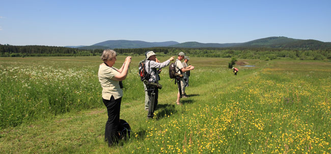 Sumava-Alpine-Meadow-Gr