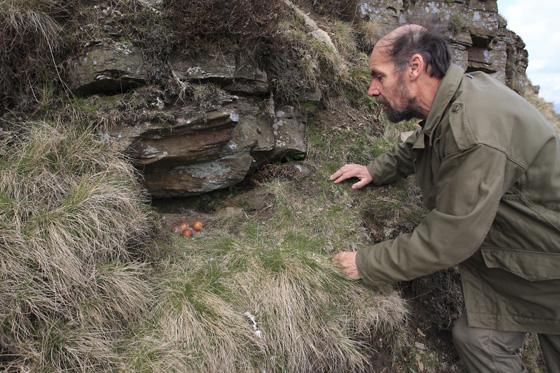 Paul-peregrine-nest-Bowland