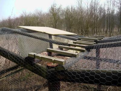 ladder trap 02