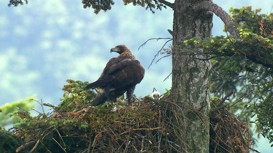 Eagle-02