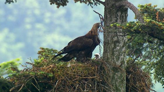 Eagle-03