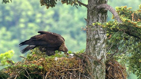 Eagle-05