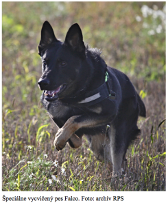 DOG TRained to sniff out carbuforan