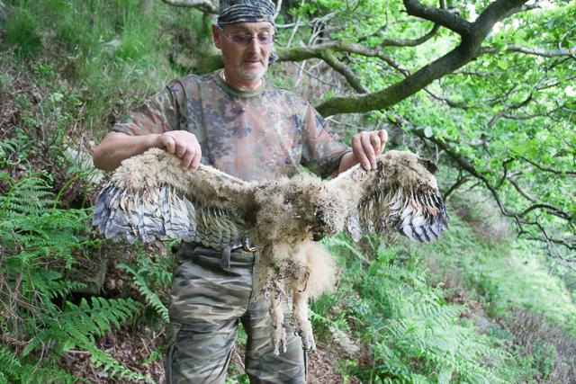 Eagle Owl Paul-7675