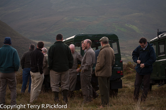 Hen Harrier Recovery Project 01-1