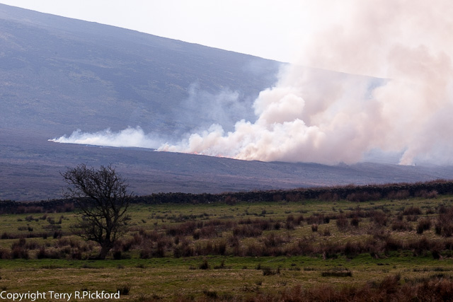Red Grouse Moor on fire 02 (1 of 1)