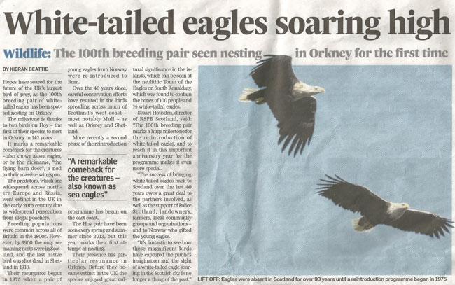SEA-EAGLE-ORKNEY