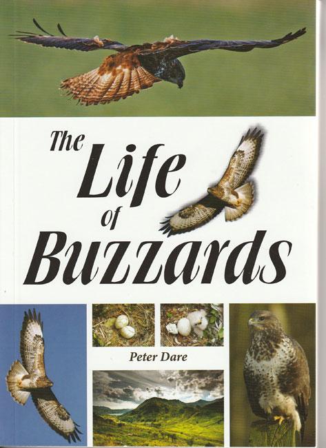 photo-of-buzzard-web