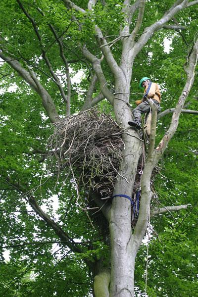 Tree-nest