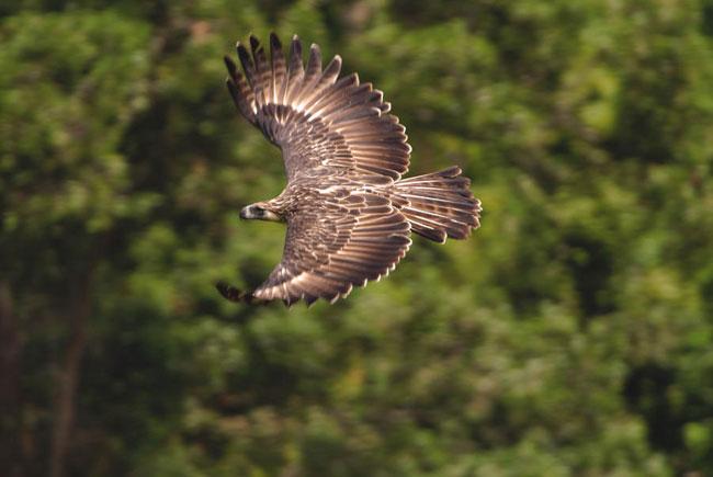 eagle1web