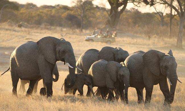 elephants_cyanide_zimbabwe-