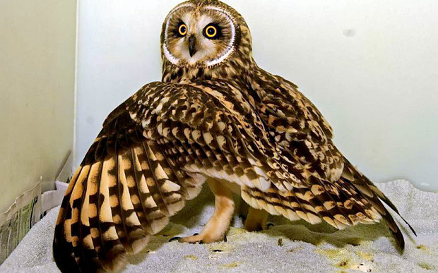 owl01_3485459b