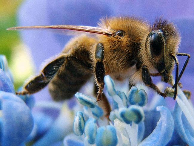 bees_pesticides-WEB