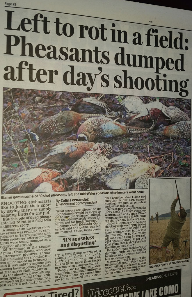 Dumped-Shot-Pheasants