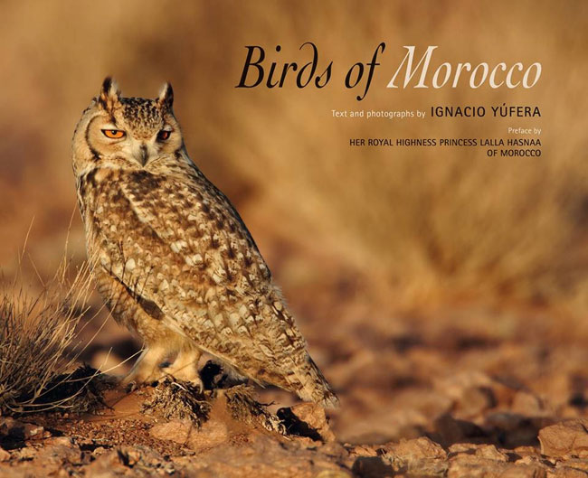 Eagle-Owl-web