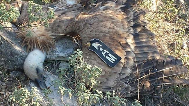 Dead-Vulture-3-web