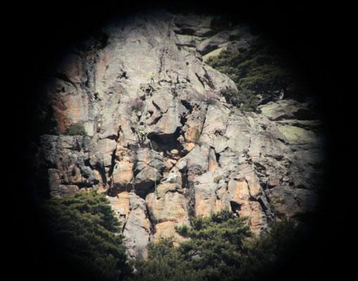 Nesting site Corsica