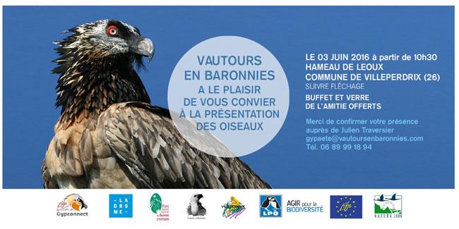 Vulture web
