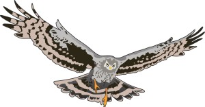 Hen Harrier Banner