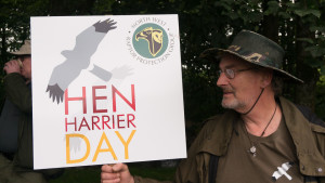 Hen Harrier Day 2016-3