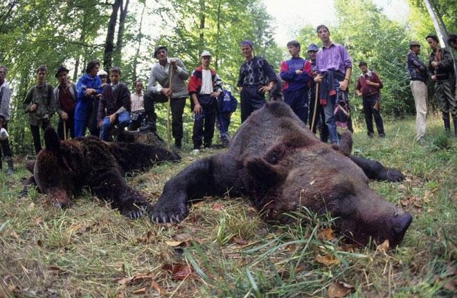 brown_bears2WEB