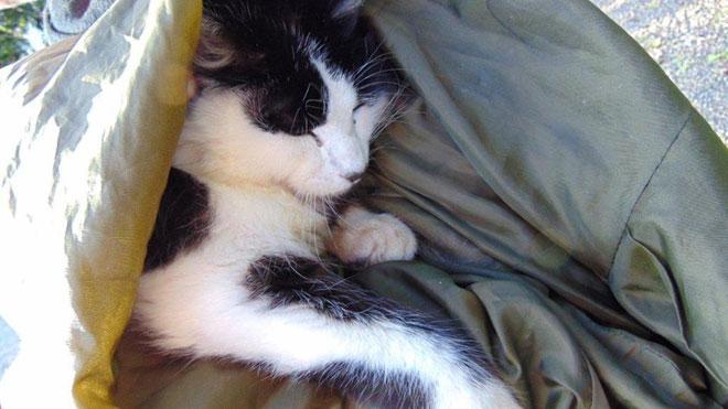 cat-rescuedweb