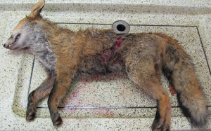 banner-fox-post-mortem