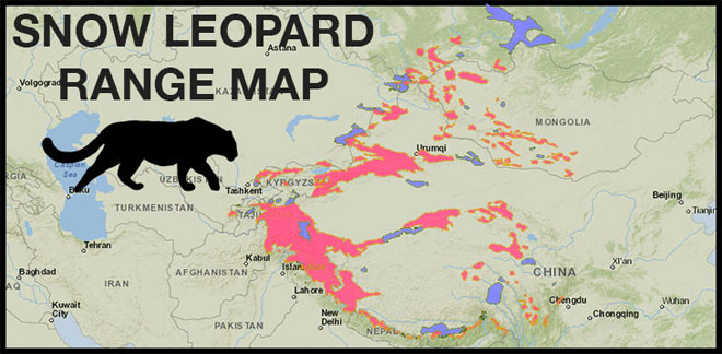snow-leopard-range-web