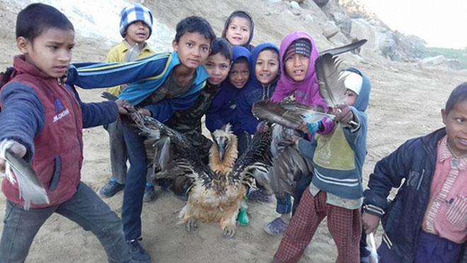 bearded-vulture-nepal-web
