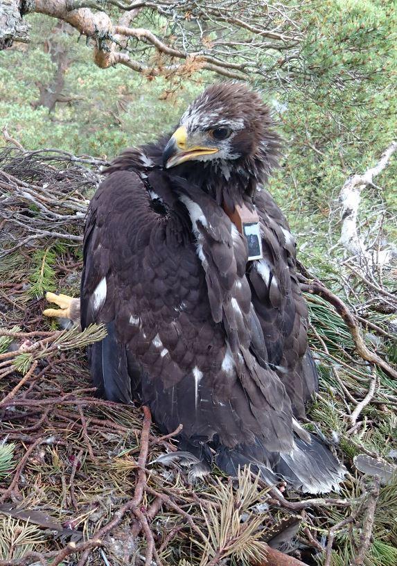 Eagle 338 missing
