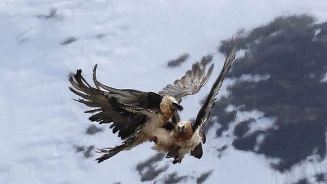 Vulture-2-web