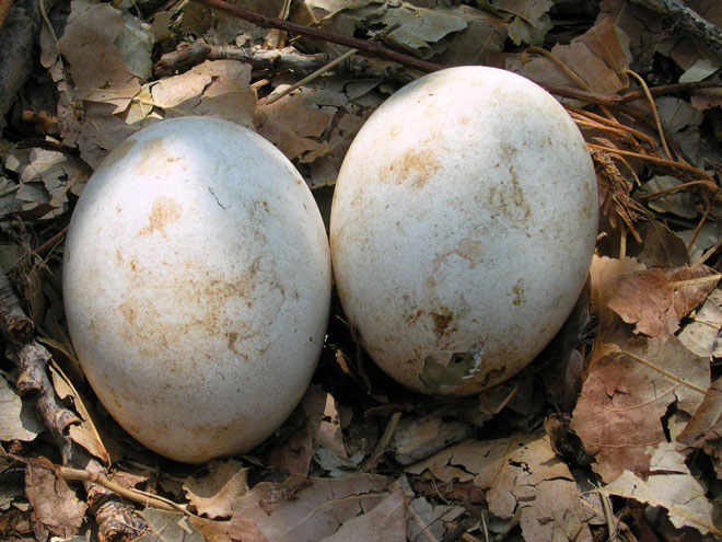 two-eggs-web