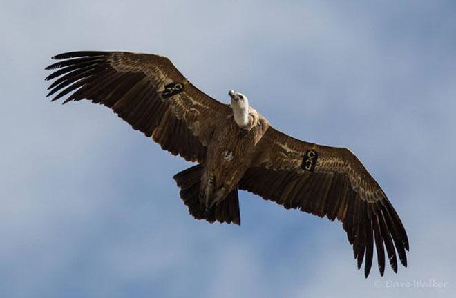 Vulture-02web