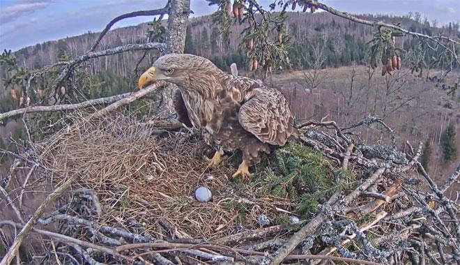 Latvia-WTE-First-Egg-02-web