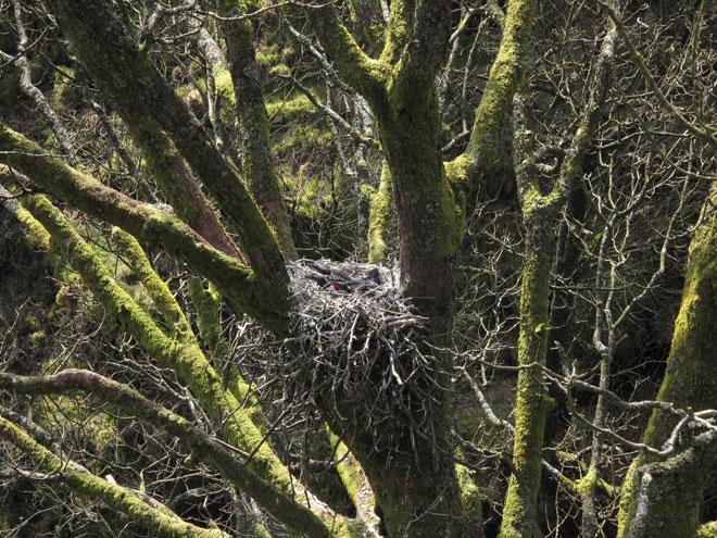Raven-web